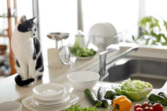 対面式キッチンにリフォームする前に確認したい!費用・メリット・デメリット!「使いにくい」って本当?