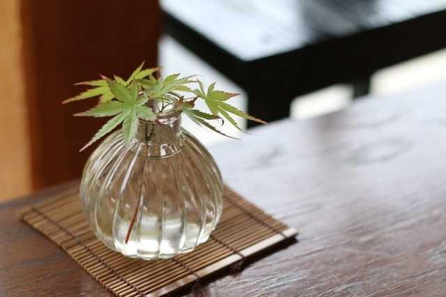 アレンジいろいろ!観葉植物のディスプレイアイデア集♪
