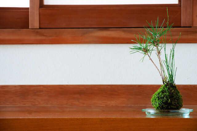 敷石や植物で日本庭園風
