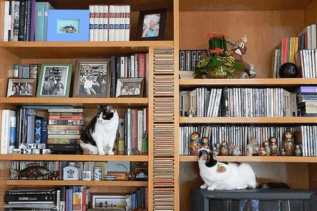 こんなデザインならお部屋も楽しくなりそう♪ユニークな本棚
