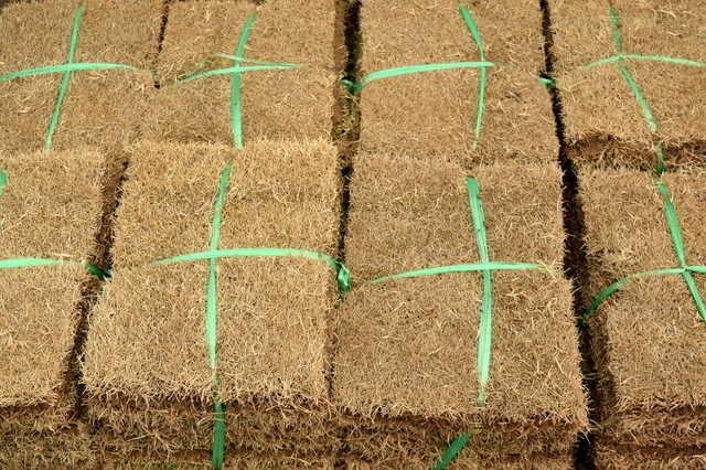 鮮やかなグリーンが素敵!芝生を敷きつめて上質なお庭づくり