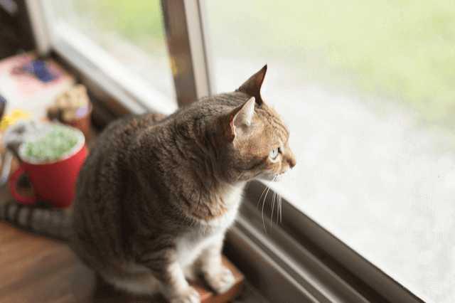 猫への思いやりがつまった家!充実のキャットウォーク実例まとめ